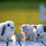 Ребенок и животные в доме